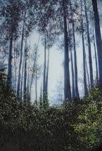 Forest Elders